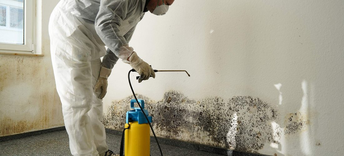 Mould Treatment – We said we'd grow on you!