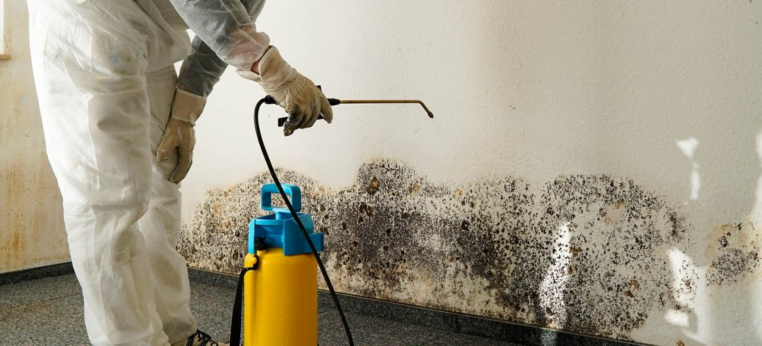 Mould removal in Solihull and Birmingham