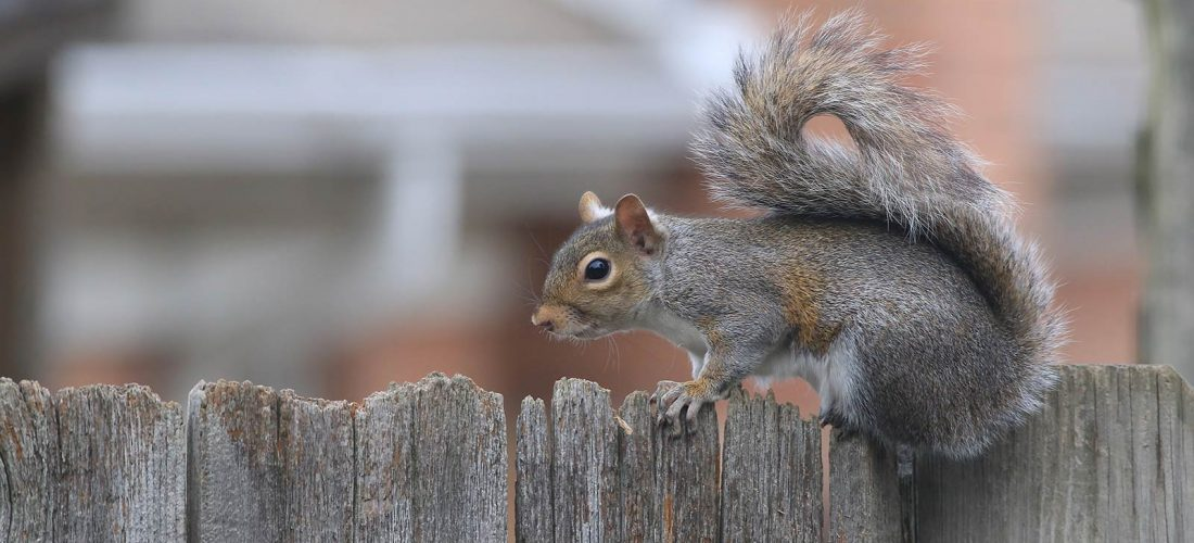 Are Squirrels driving you nuts?